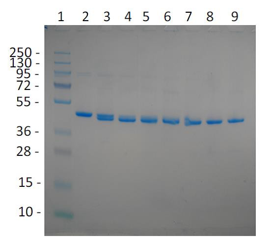 Razor(TM) TEV Protease