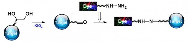 iFluor(TM) 405 hydrazide