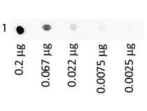 Human IgA Serum Fluorescein Conjugated