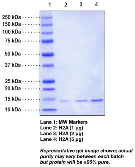 Histone H2A (Xenopus recombinant)