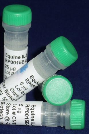 Interleukin-6, equine recombinant (reIL-6)