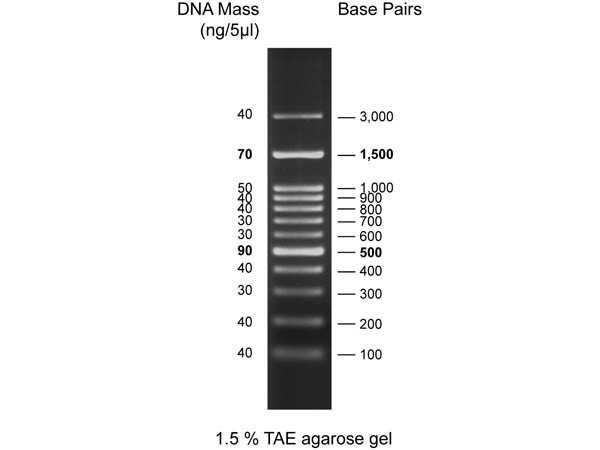 Diamond DNA Ladder 100-3000bp