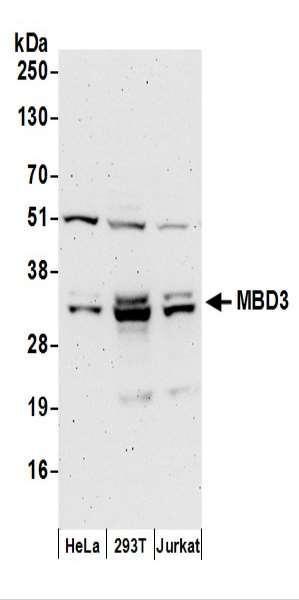 Anti-MBD3