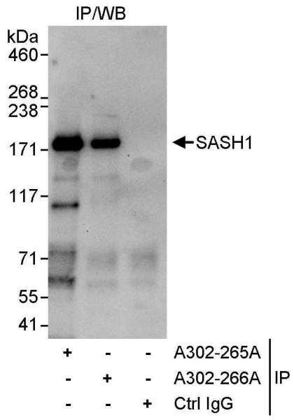 Anti-SASH1