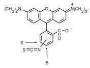 Anti-Rhodamine, clone 11H10