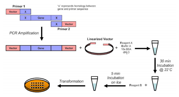 Fast, Simple & Efficient Cloning Kit with Competent Cells