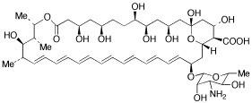 Amphotericin B (Fungizone) USP (Streptomyces)