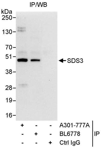 Anti-SDS3