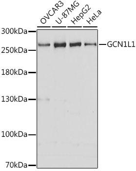 Anti-GCN1L1