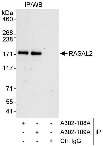 Anti-RASAL2