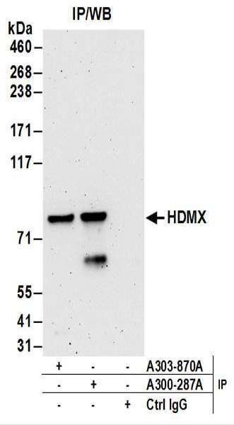 Anti-HdmX/MDM4