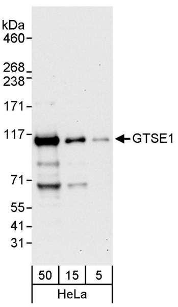 Anti-GTSE1
